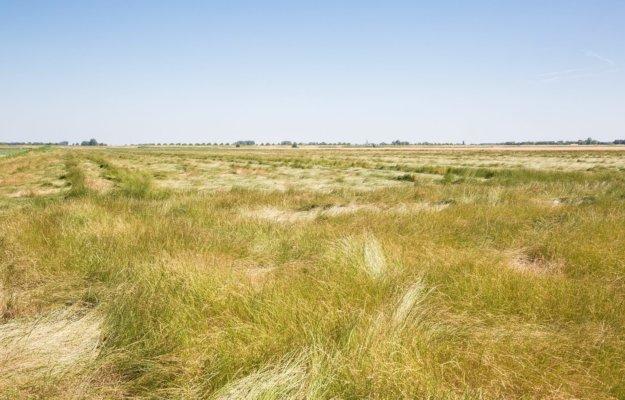 Graslandvernietigingsschema 2021