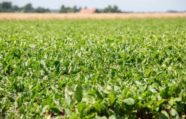 Voorstel om landbouwvrijstelling te schrappen